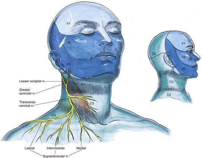 Cervical Plexus Block | Anesthesia Key