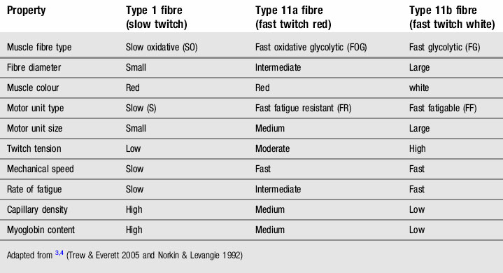 fast and slow twitch fibres coloring pages | Classification of muscles | Anesthesia Key