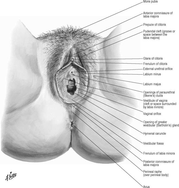 Praktisk anatomi, undersøgelse, palpation og manuel-1509
