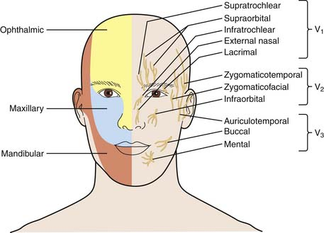 Supraorbital Nerve Block for Supraorbital Neuralgia ...