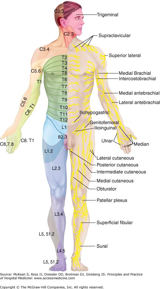 Acute Back Pain Anesthesia Key