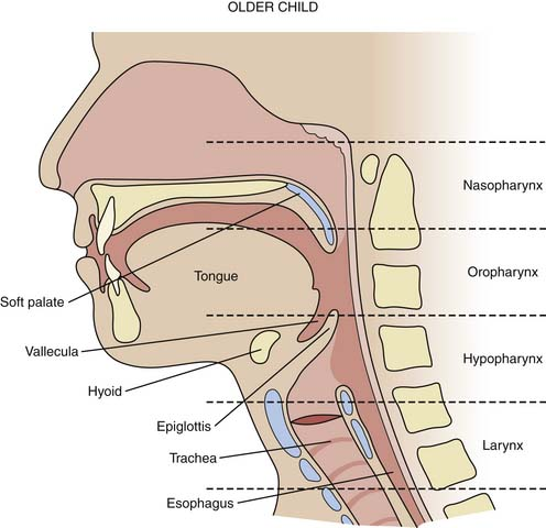Structure and Development of the Upper Respiratory System in Infants ...