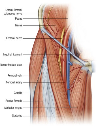 limb blocks | anesthesia key, Muscles