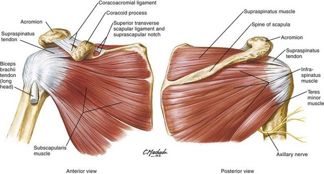 Shoulder Anesthesia Key