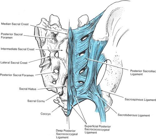 Anatomy of the Neuraxis   Anesthesia Key