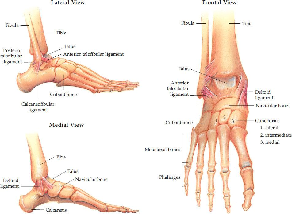 Ankle and Foot Injuries | Anesthesia Key