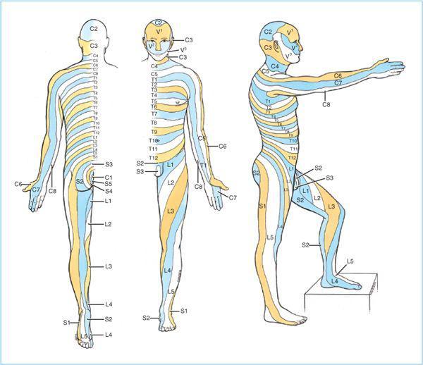 Spinal Anesthesia Anesthesia Key