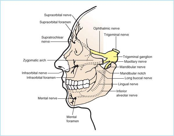Head and Face | Anesthesia Key