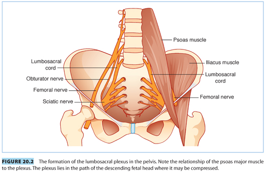 More on the pelvic floor, the psoas, and the big