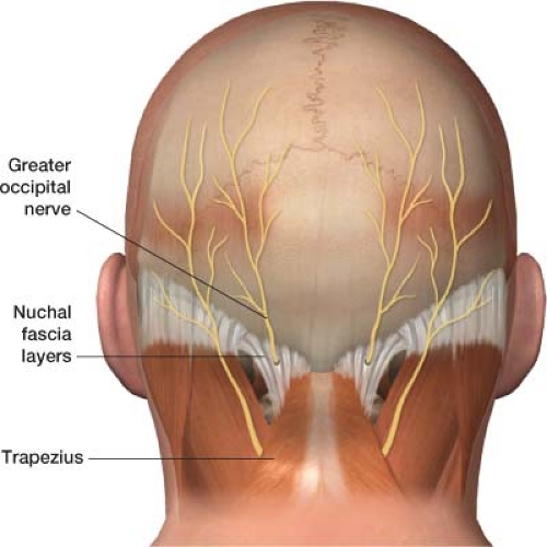 Occipital facial location