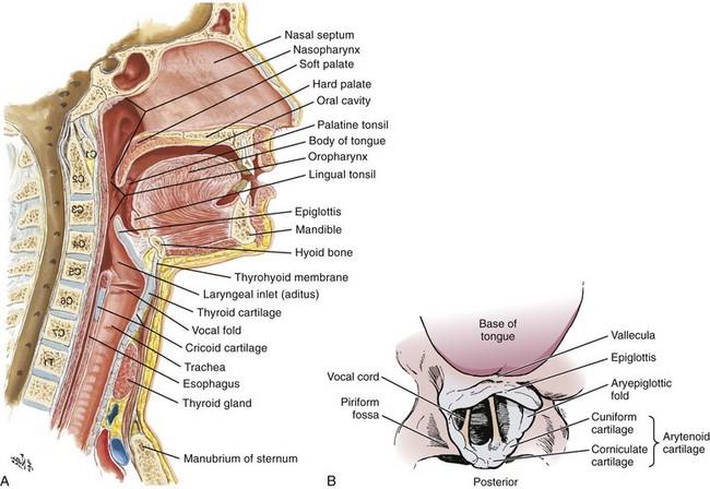 Tracheal Intubation | Anesthesia Key