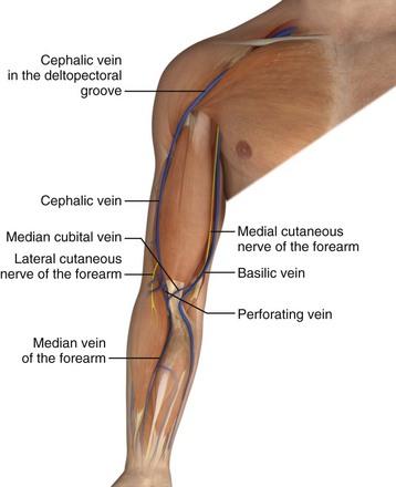 venous cutdown | anesthesia key, Cephalic Vein