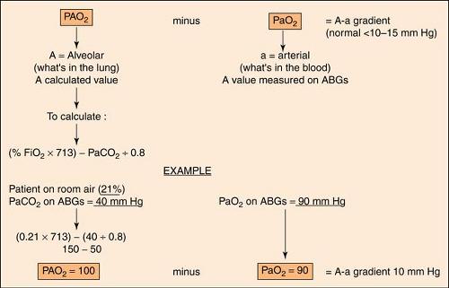 Pulmonary System Anesthesia Key