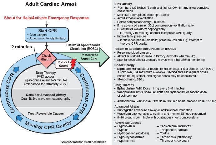 58 Cardiopulmonary Resuscitation Anesthesia Key