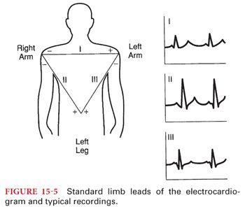Cardiac Physiology | Anesthesia Key