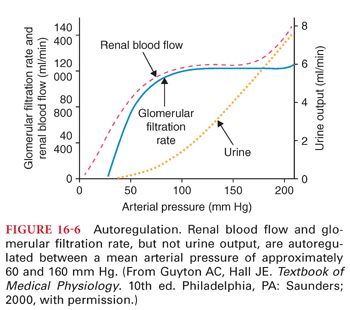 Renal Physiology   Anesthesia Key