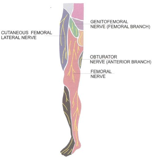 three-in-one block. | anesthesia key, Muscles