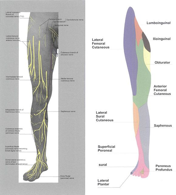 Cutaneous Nerve Blocks Of The Lower Extremity