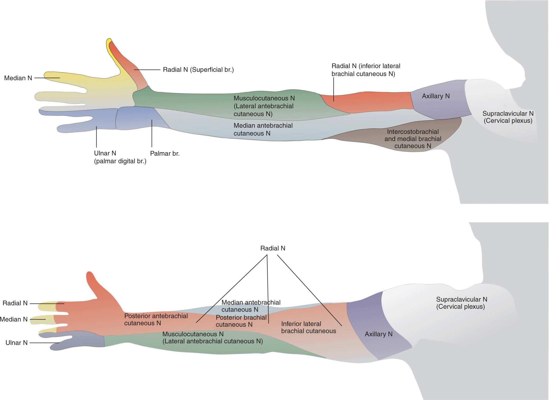 Interscalene Brachial Plexus Block | Anesthesia Key