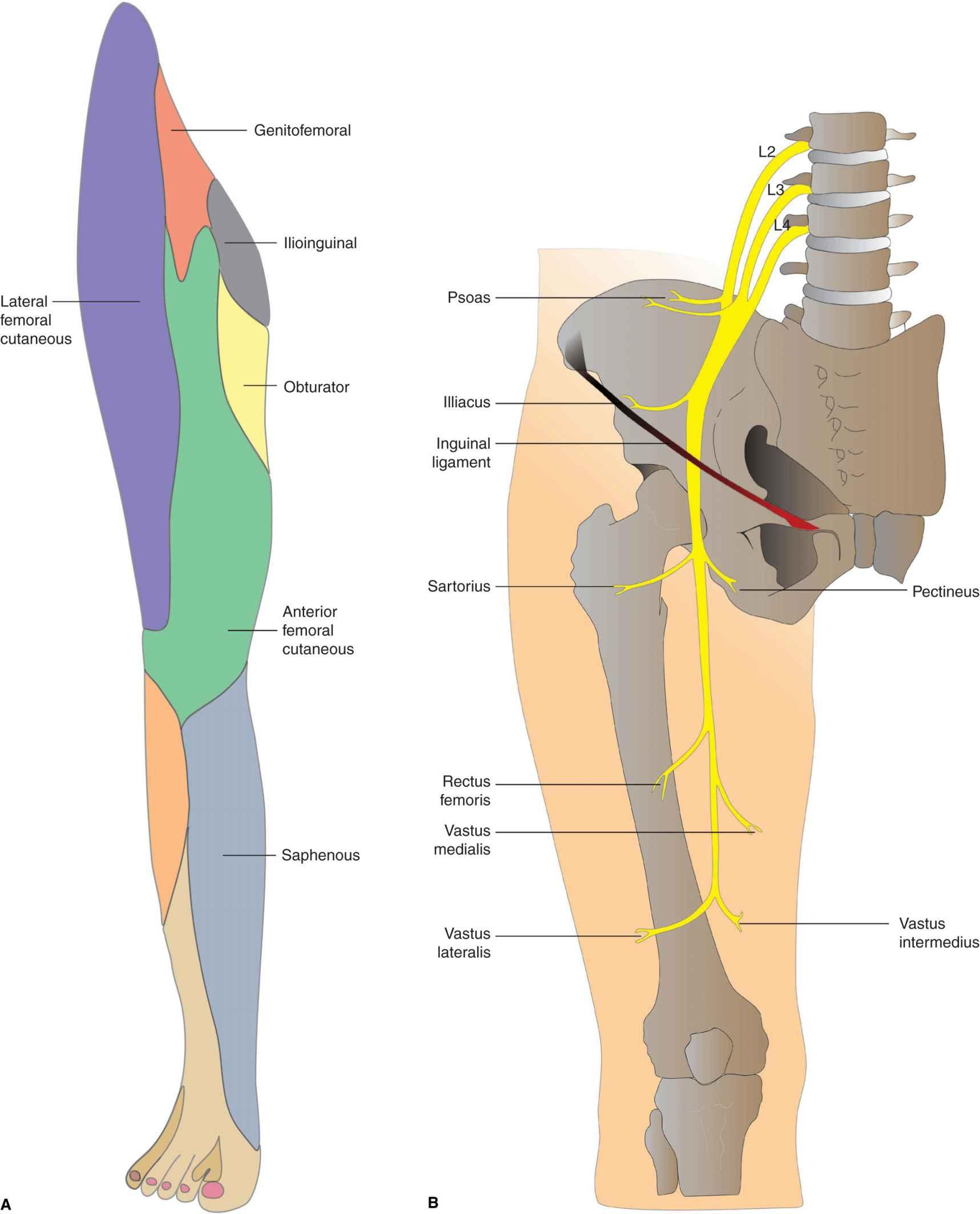 Lumbar Plexus Block | Anesthesia Key