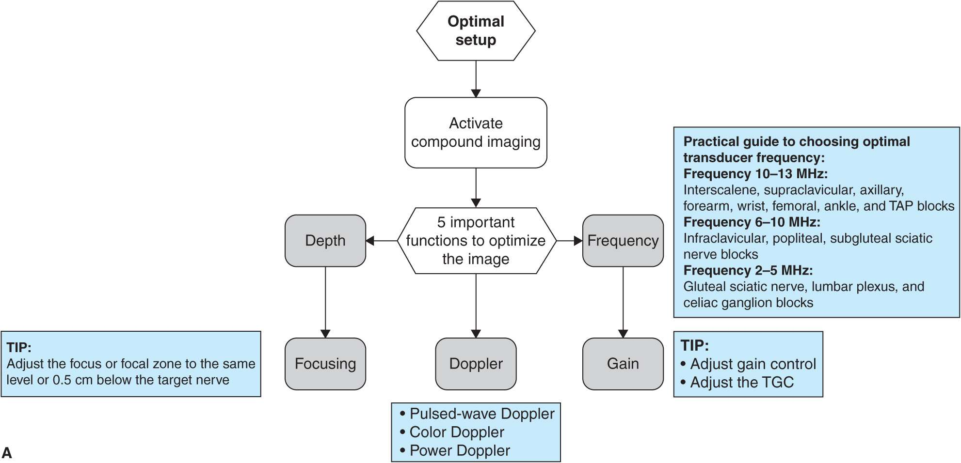 Optimizing an Ultrasound Image | Anesthesia Key