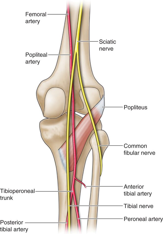 Percutaneous Peripheral Nerve And Field Stimulation Anesthesia Key