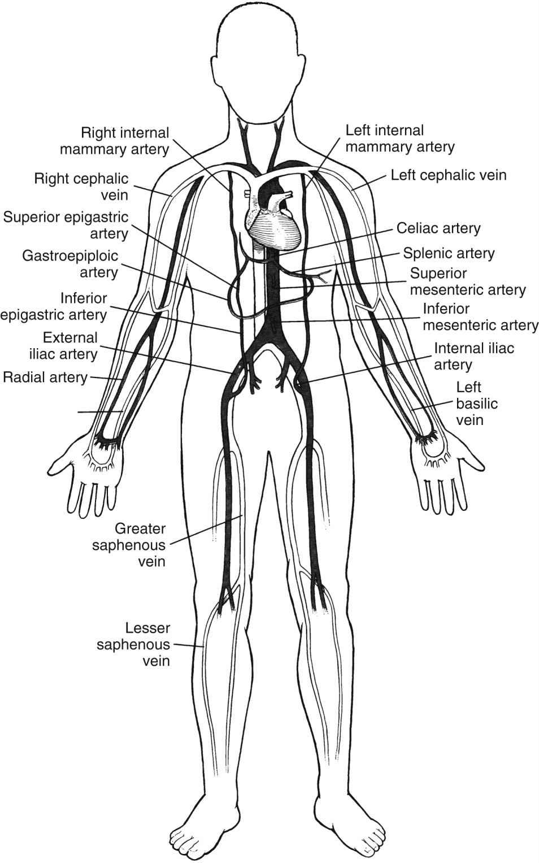 Lima artery anatomy 1572555 - follow4more.info