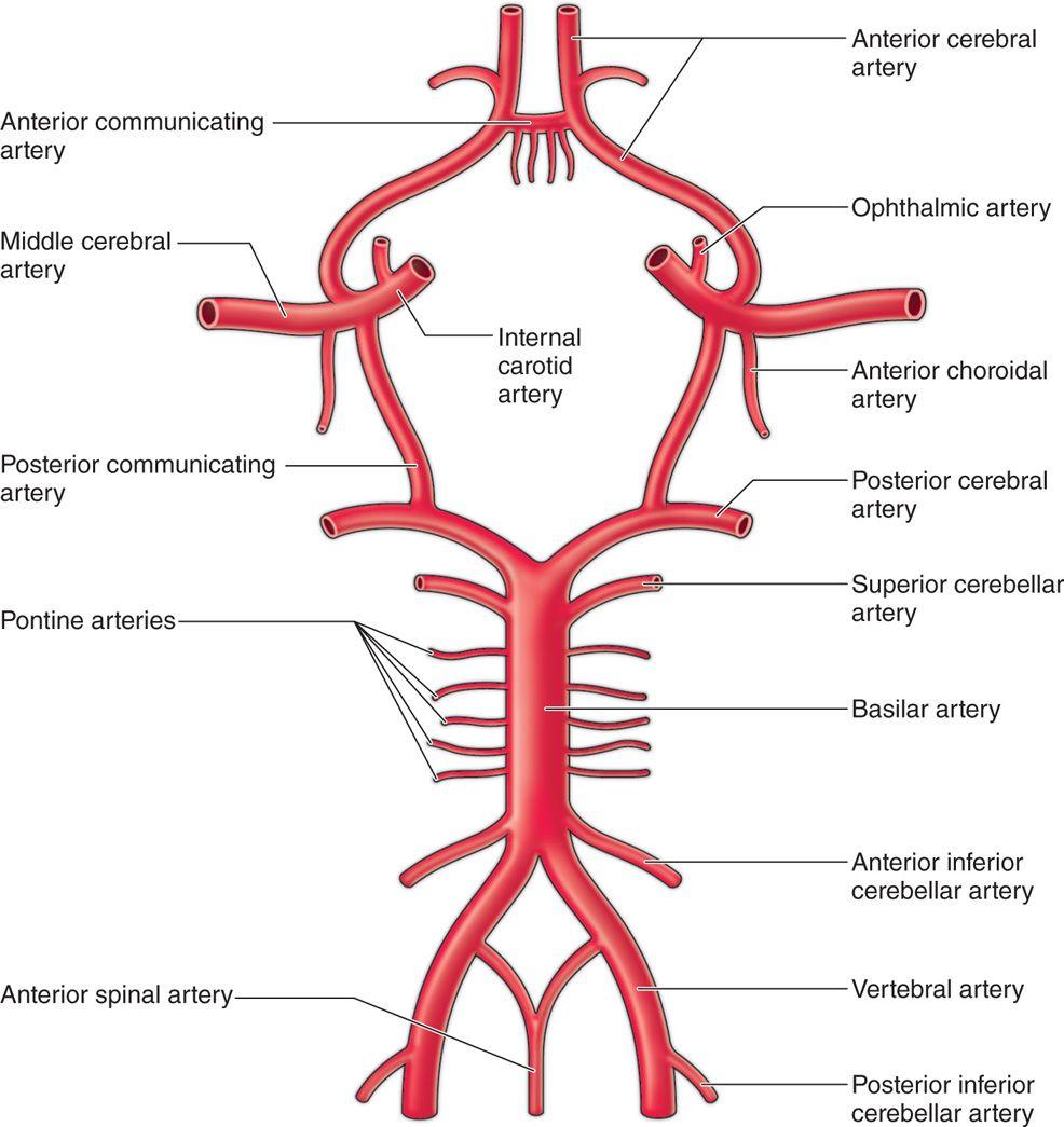Cervical Nerve Root Blocks   Anesthesia Key